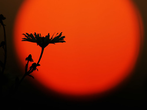 """plant in the setting sun • <a style=""""font-size:0.8em;"""" href=""""http://www.flickr.com/photos/22289452@N07/8105894143/"""" target=""""_blank"""">View on Flickr</a>"""