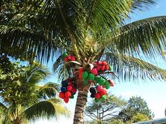 Colourful Coconuts
