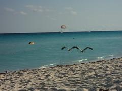 Birds on Beach