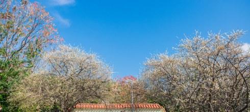 【台北】。搭乘台北淡水捷運也可以賞梅花.市區中的小確幸│士林志成公園.士林官邸