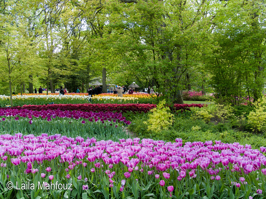 Tulpen Holland Keukenhof The World S Most Recently Posted Photos Of Zwiebelblumen Flickr