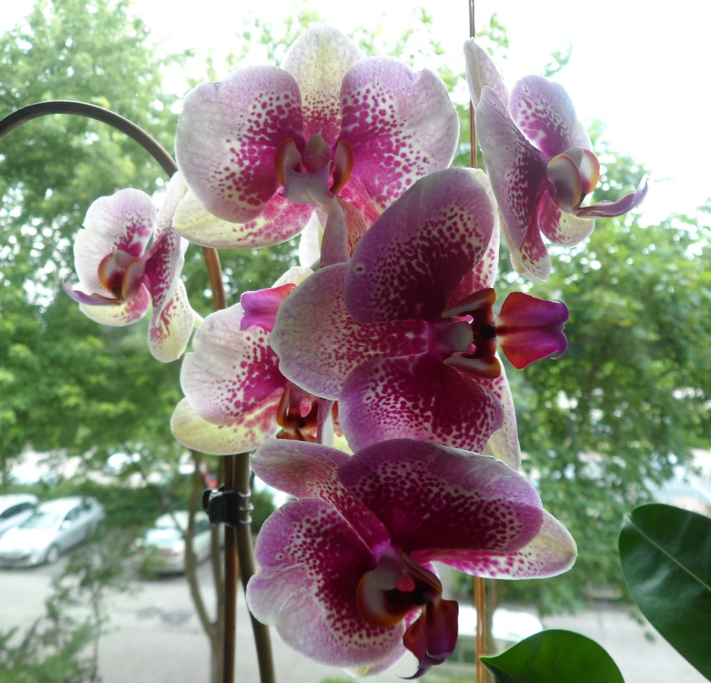Blumen Orchideen The World S Best Photos Of Orchideen And Zimmerpflanzen Flickr