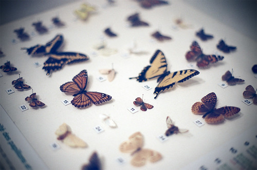 Encased Butterflies by flossyflotsam
