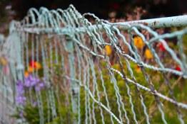 Strath fence in summer