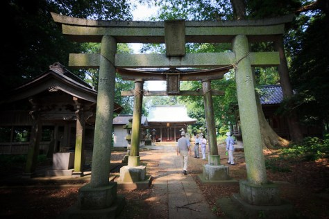 #18 The Giant Zelkova of Fujioka Shrine
