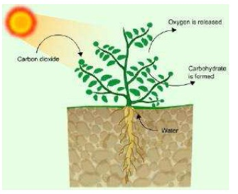 NCERT Solutions for Class 7th Science Chapter 1   Nutrition in Plants Image by AglaSem