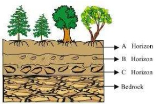 NCERT Solutions for Class 7th Science Chapter 9   Soil