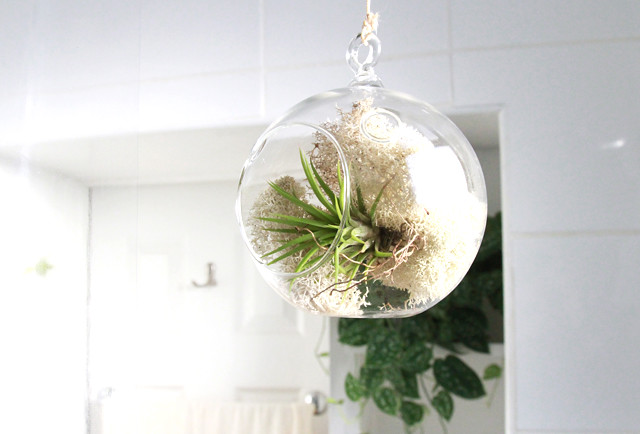 green tree boutique giveaway air plant