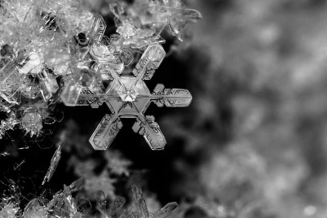 Snowflake Bokeh ~ Explore 2.7.13 por Marc Kohlbauer