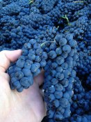 Bella Wines