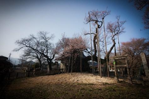 Ω2: The Ancient Sakura of Yamataka