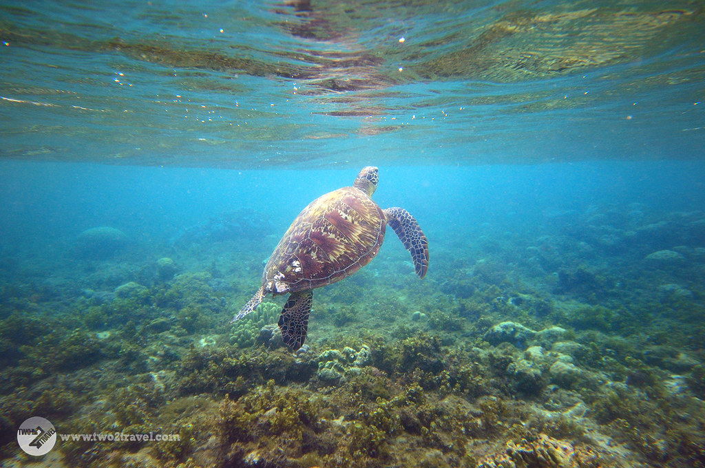 TWO2TRAVEL: Apo Island, Negros Oriental