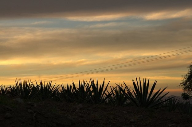Sunset at Tequila