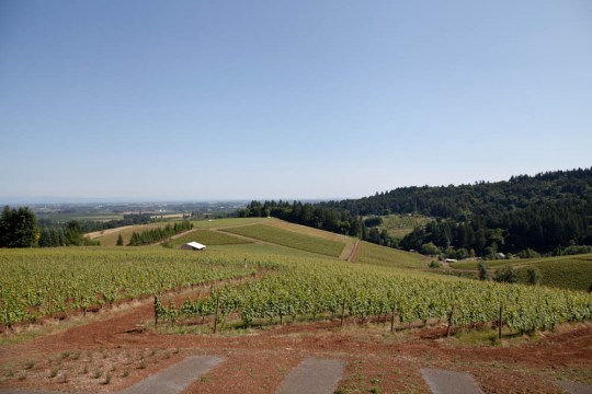 Vineyards-26