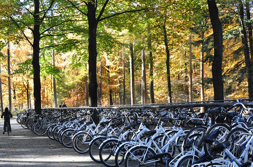 White Bicycles at De Hoge Veluwe National Park