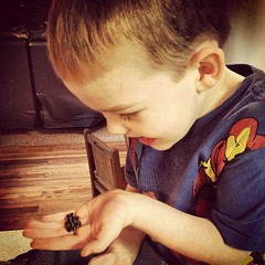 Denver's first time holding a bumblebee walking toad.