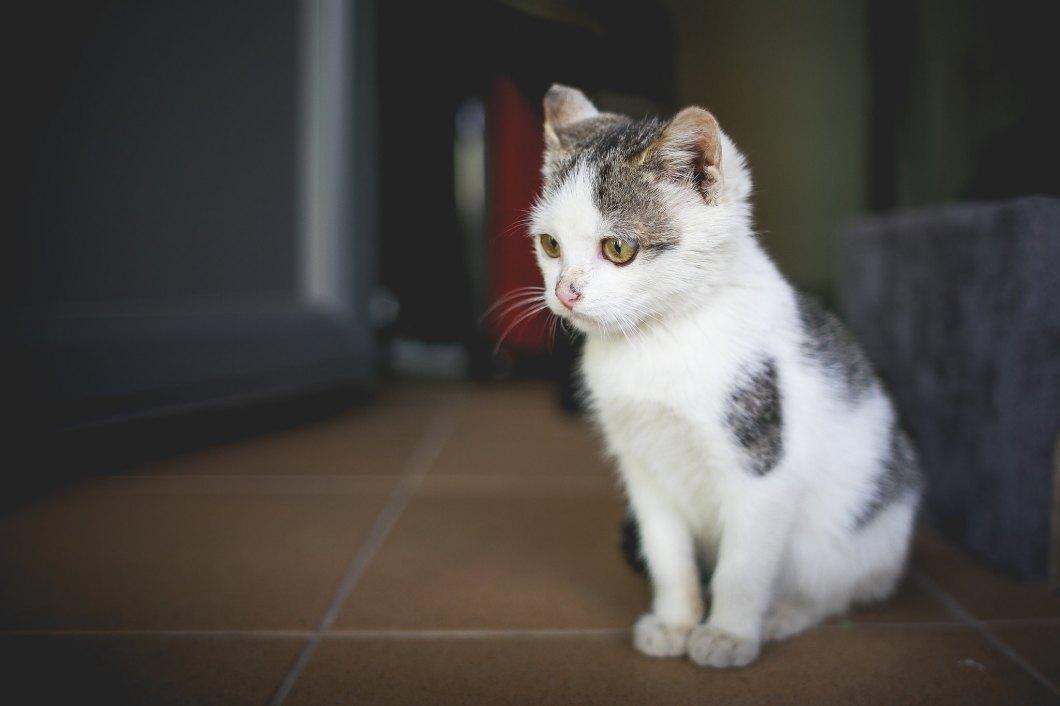 Imagen gratis de un gatito en casa