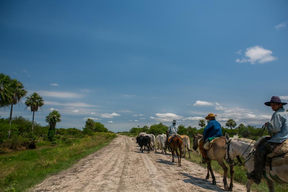 Los caminos de tierra que llevan al pantanal ofrecen vistas y colores singulares, como el de estos vaqueros que llevaban ganado a una estancia. (Tetsu Espósito)