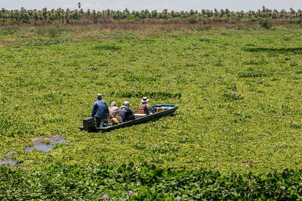 Científicos navegan las aguas del río entre los camalotes mientras inician una travesía por la zona para buscar y catalogar especies de aves. (Tetsu Espósito)