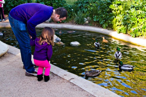 looking at the ducks and turtles