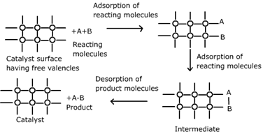 CBSE Class 12 Chemistry Notes: Surface Chemistry – Catalyst Image by AglaSem
