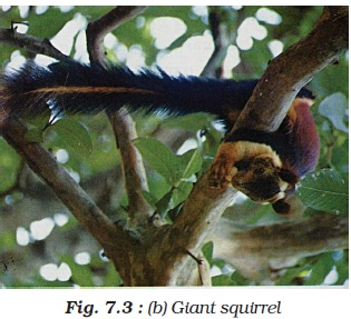 NCERT Class VIII Science Chapter 7 Conservation of Plants and Animals Image by AglaSem