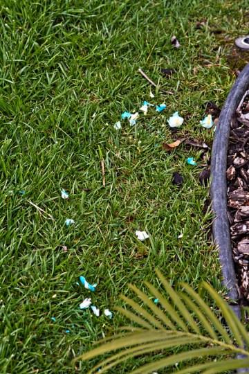 egg carnage