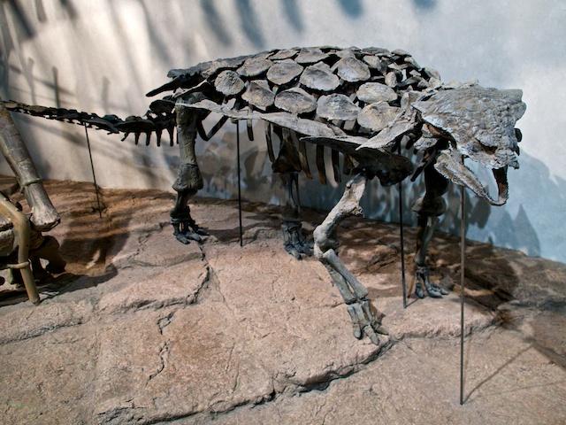 Gargoyleosaurus