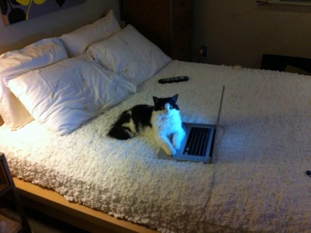 Calliope the feline blogger