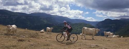 Riding with the Cows