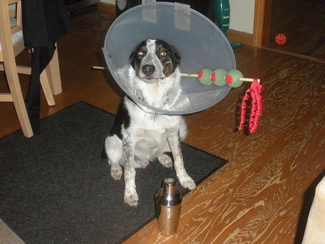 Dog martini costume for Halloween