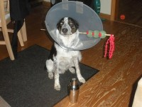 Dog martini costume for Halloween