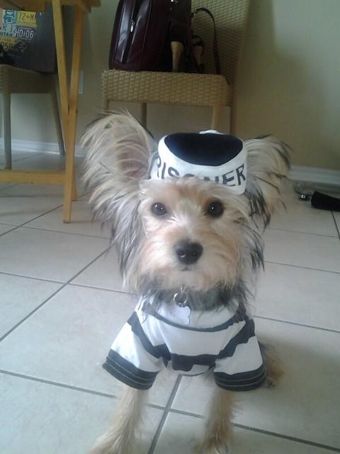 Prison Dog Costume