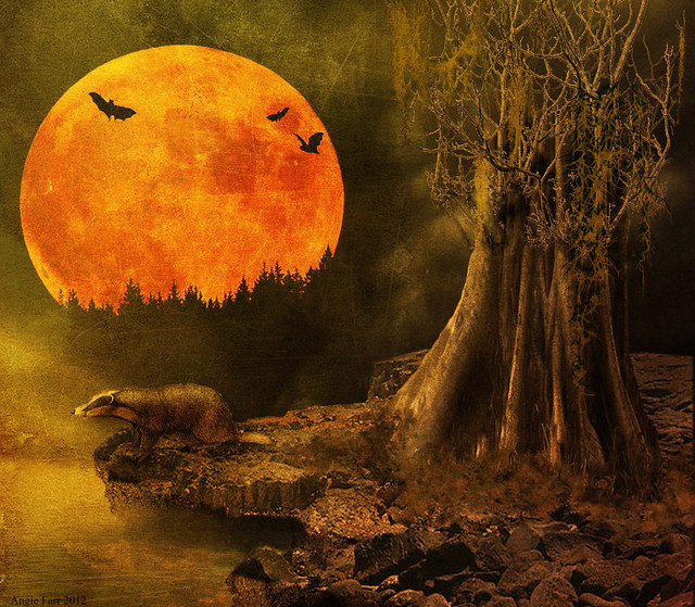 Fall Leaf Wallpaper For Mobile Autumn Moon Flickr Photo Sharing