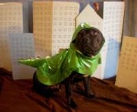 Dog godzilla costume   Flickr - Photo Sharing!