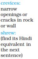NCERT Class VIII English Chapter 8 A Short Monsoon Diary Image by AglaSem