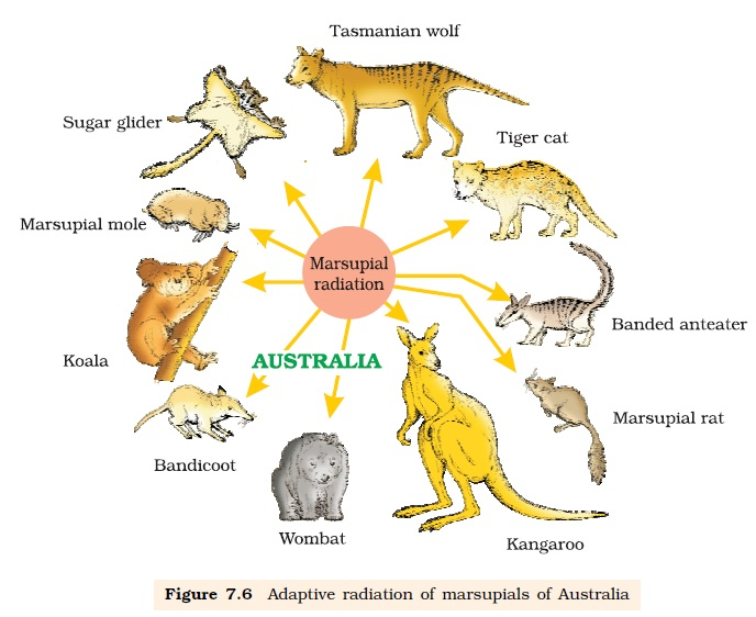 NCERT Class XII Biology Chapter 7 : Evolution Image by AglaSem