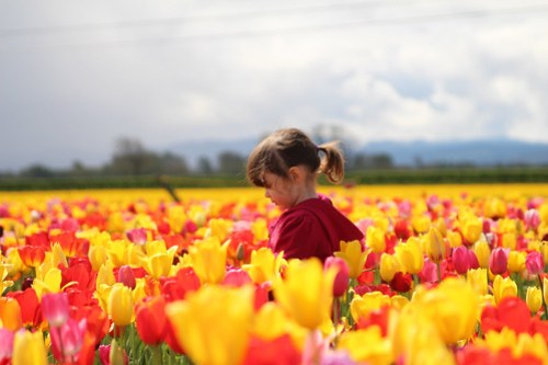 In the colorful tulip field