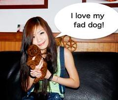 fad dog