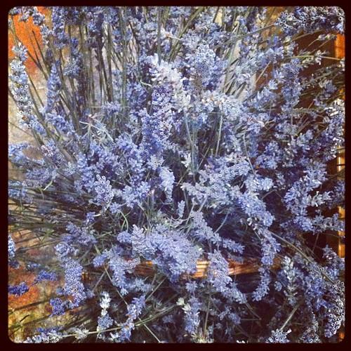 #familyadventure #italy #lavendar xoS
