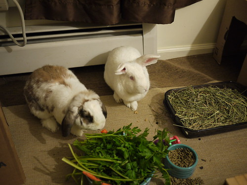 betsy and gus at dinnertime