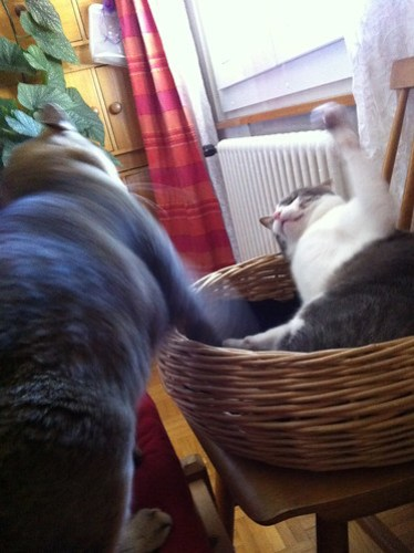 Tounsi in Quintus's basket, holding his ground