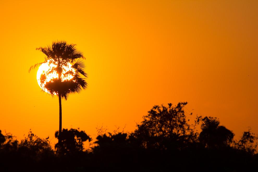 La silueta del sol amaneciendo puede verse detrás de unas palmeras mientras los cantos de cientos de especies de aves anunciaban un nuevo día. (Tetsu Espósito)