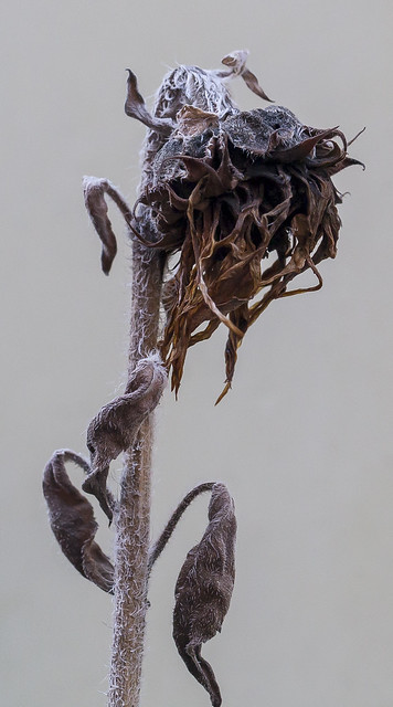 Bb Ii Withering Plant | A Withering Plant Dies As The Cold