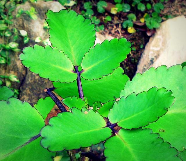 Ciri Ciri Tumbuhan Higrofit Catatan Guru Sd Ciri Khusus Tumbuhan Blog Paendoo Tumbuhan Xerofit Hidrofit Dan Higrofit