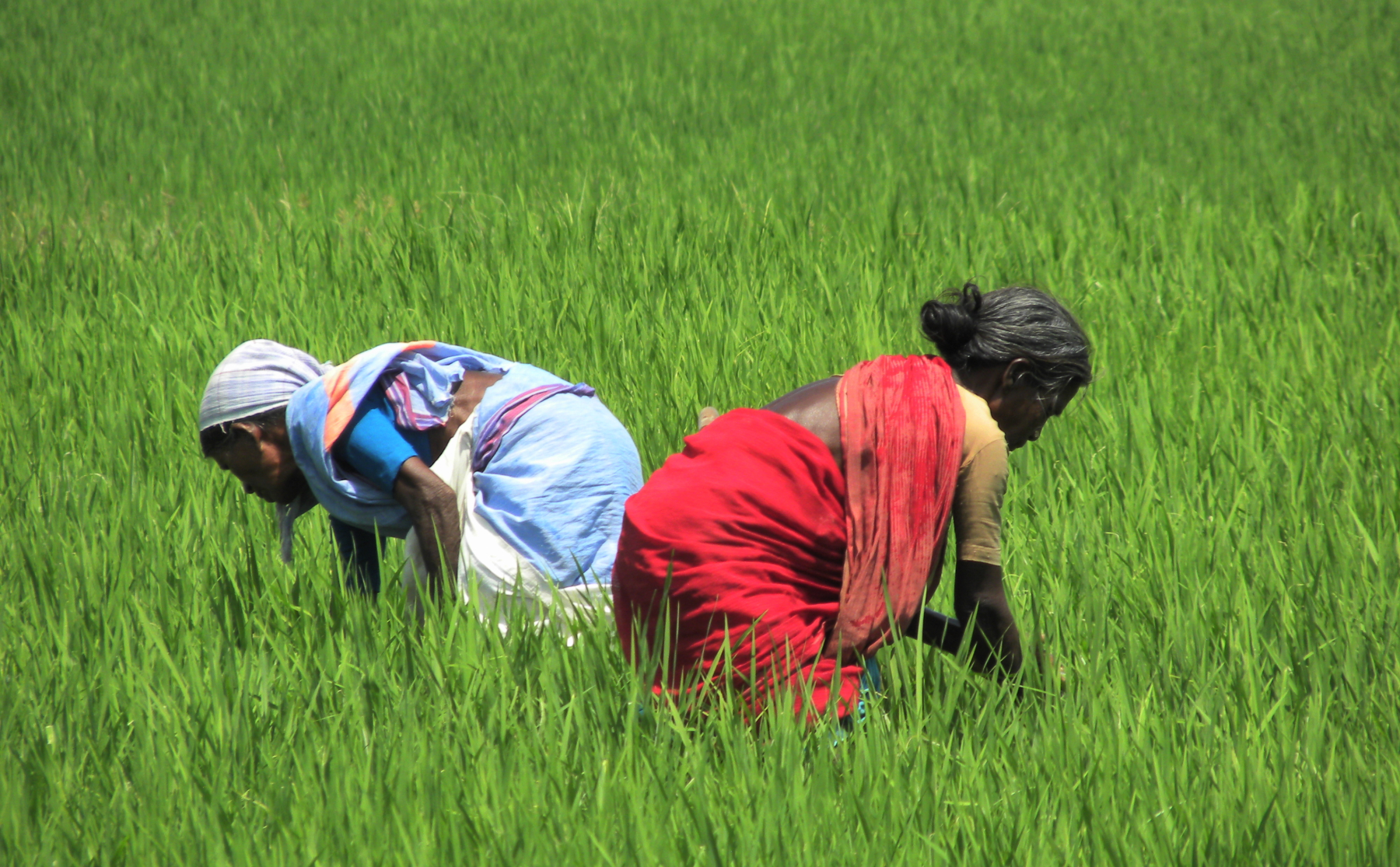 Sustainable Farmer Organic Farming In India Points The Way To Sustainable Agriculture