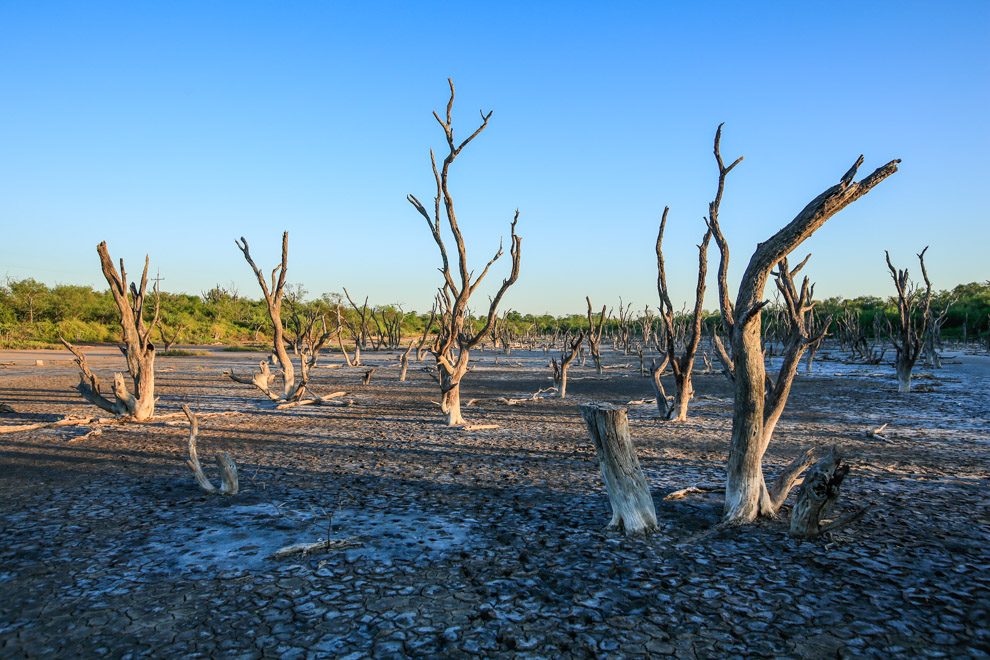 En épocas de sequía, las aguas que forman lagunas se salinizan totalmente modificando el ecosistema hasta el siguiente periodo, en que nuevamente se lava con la corriente, este proceso dura entre 30 y 50 años periódicamente. (Tetsu Espósito).