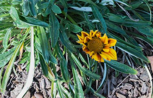 Oakland Flowers