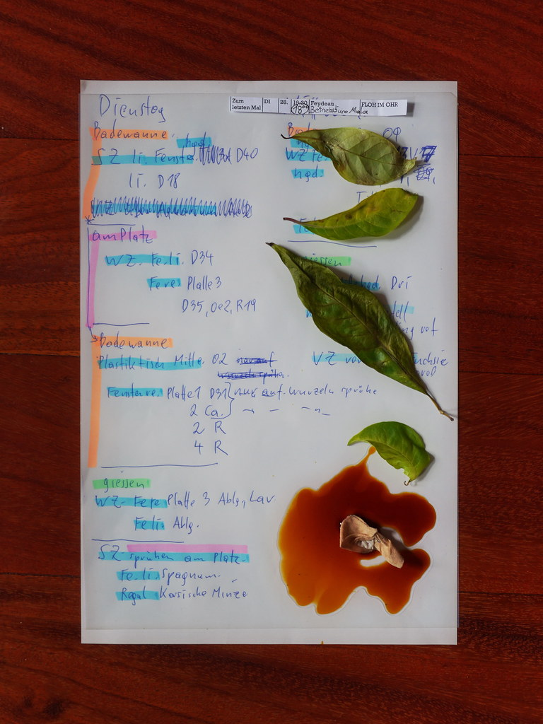 Blumennamen Liste Fathers List Plants I Had To Water Today Fallen Leaf T Flickr