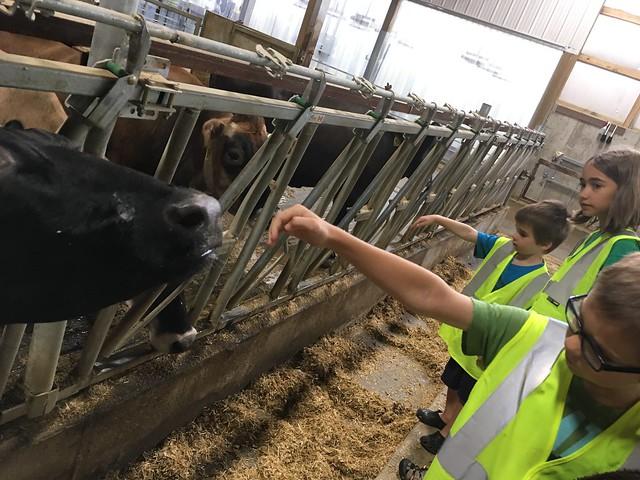 cow field trip